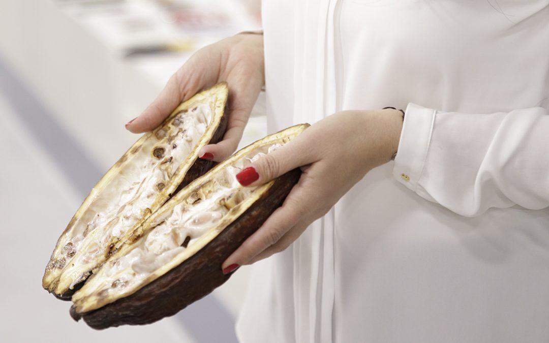¿Qué es la fermentación del cacao?