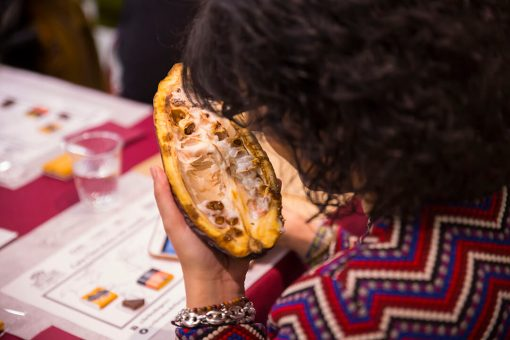 interior fruta de cacao