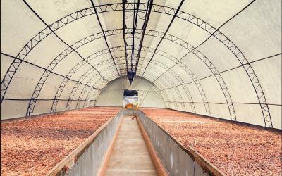 El secado del cacao